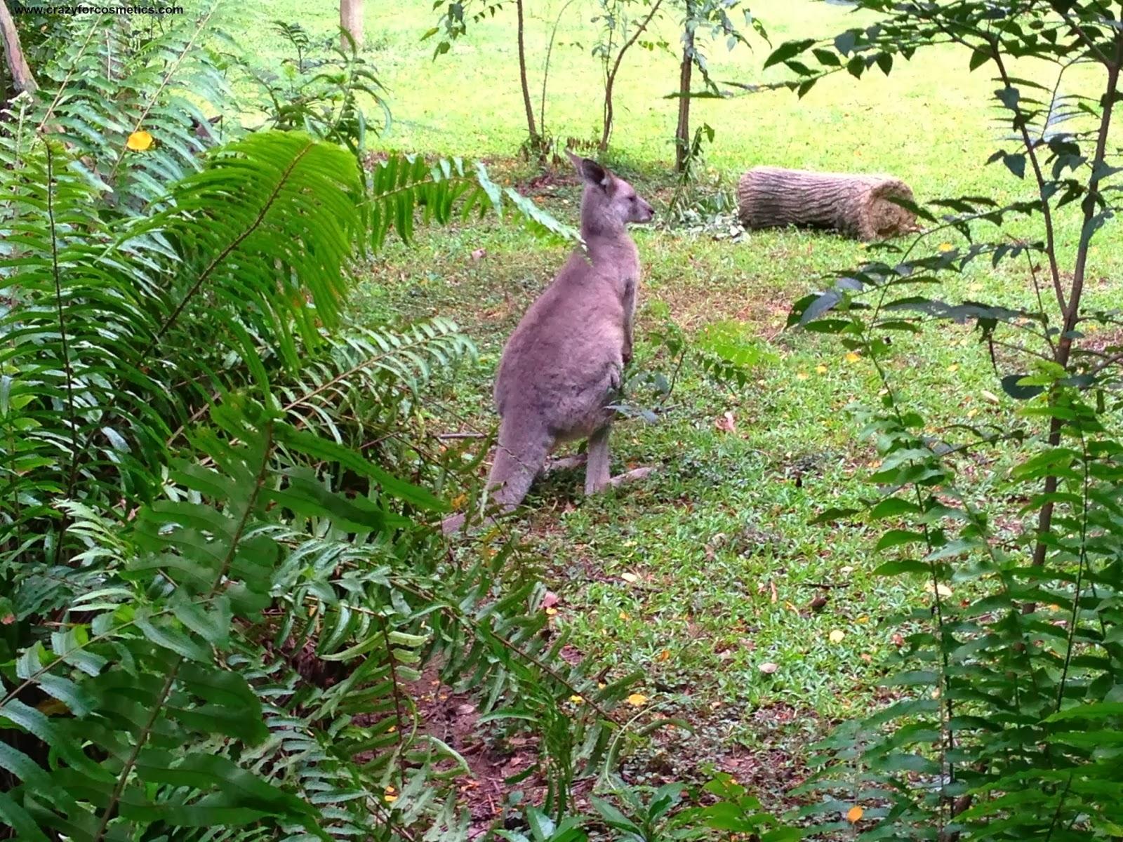 Singapore ZOo Timings-Singapore Zoo Kangaroo-Singapore Zoo rainforest experience