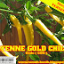 Bibit CAYYENE GOLD CHILLI