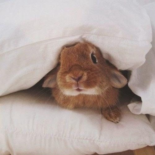 coelhinho na cama