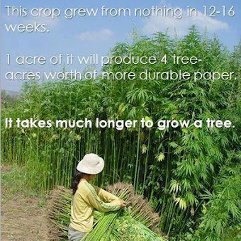 allow farmers to grow hemp.