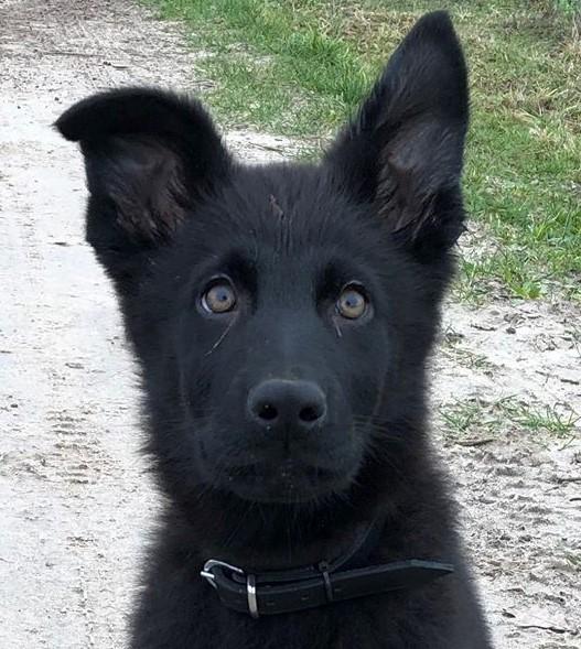 Furry Sweetheart
