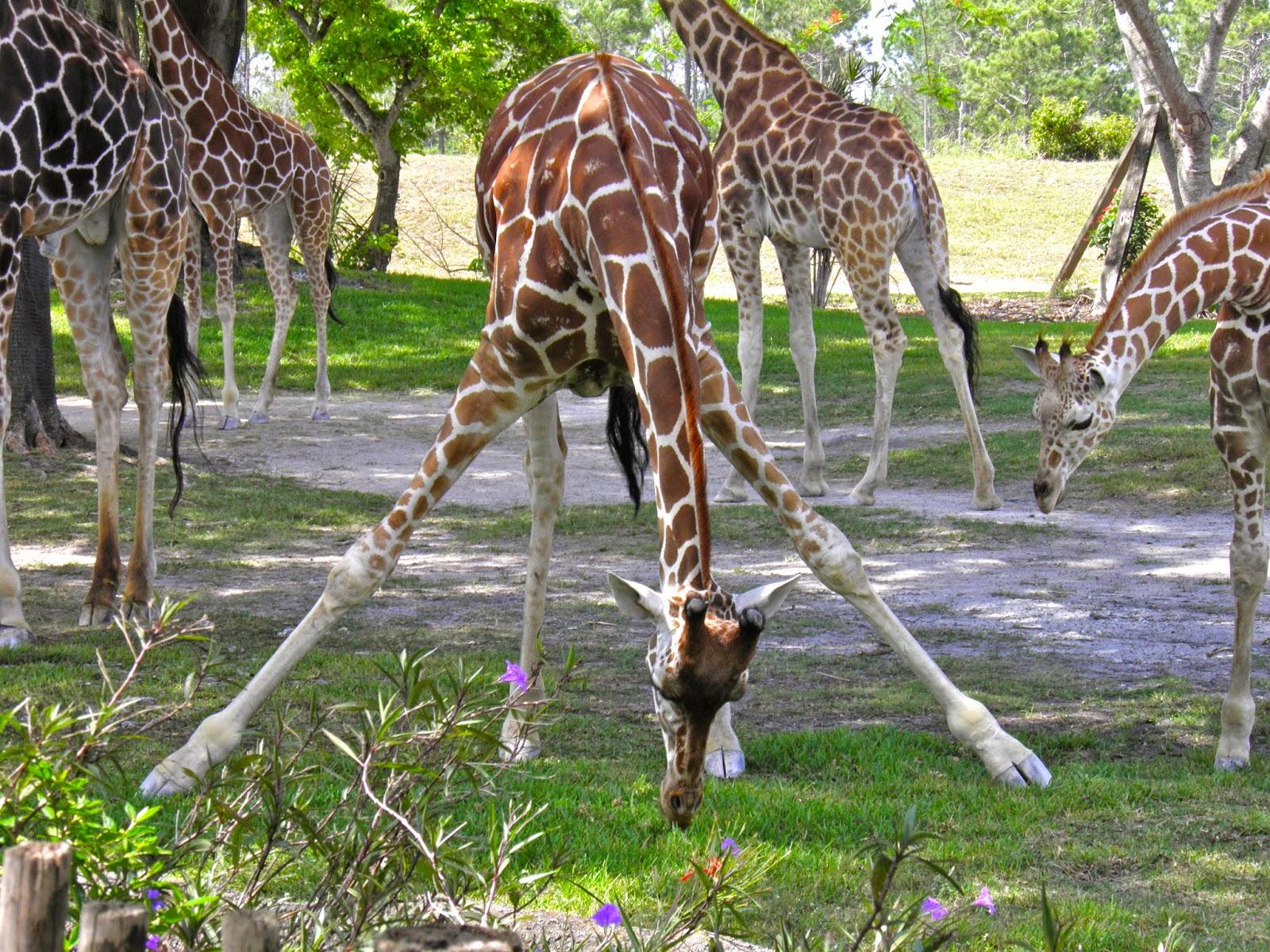 Zoo de Miami | From Spain to Miami