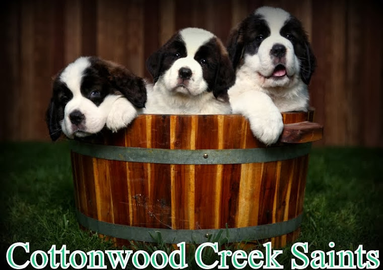 COTTONWOOD CREEK SAINTS