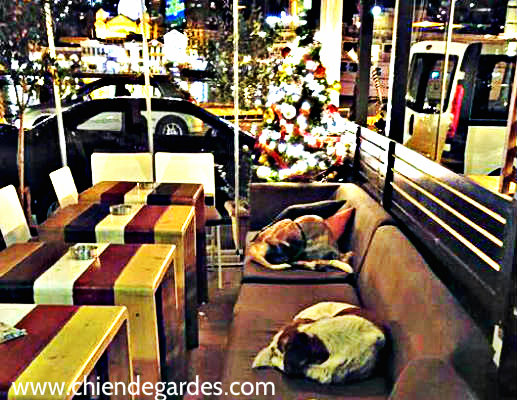 café ouvre ses portes chaque nuit pour accueillir des chiens errants