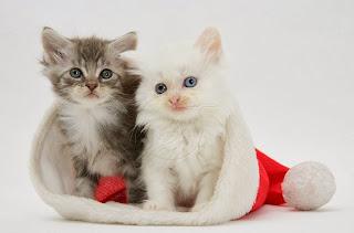 Tabby gatitos en un sombrero de Santa