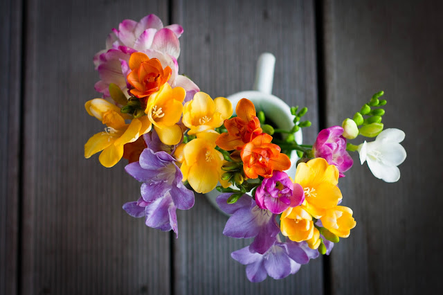 colorful freesias