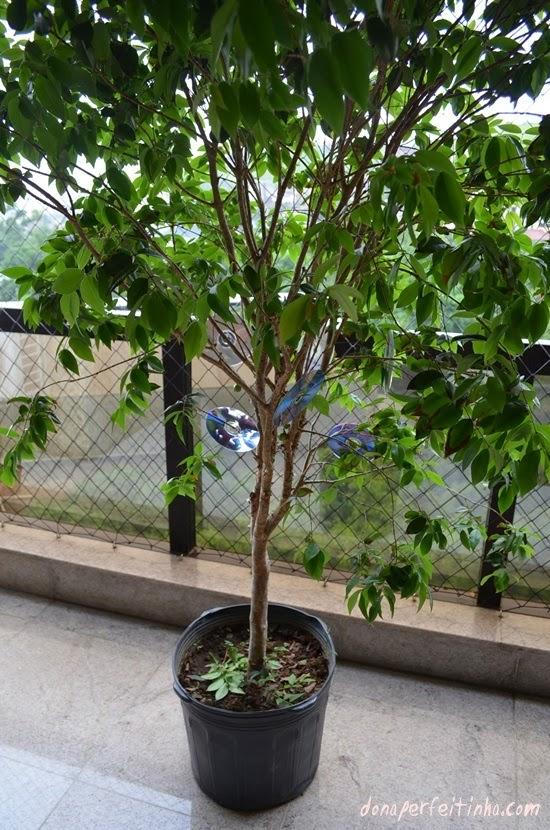 Famosos Espante os pássaros de suas árvores frutíferas! - Blog Dona  WR35