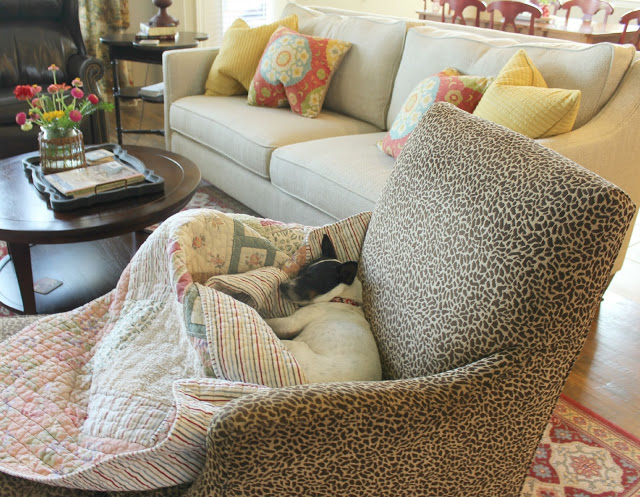 guard dog, leopard chair