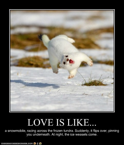 Funny Relationship Captions : Funny animals with captions picture.funny animals ~ Funny images and ...