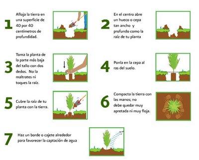 Planeta verde como plantar un arbol for Pasos para sembrar una planta