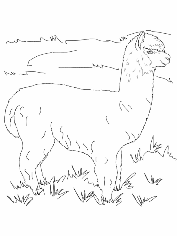 Alpaca Coloring Pages Free Alpaca Coloring Pages