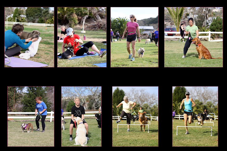 LEASH YOUR FITNESS  Let me capture the memories at your next event or party