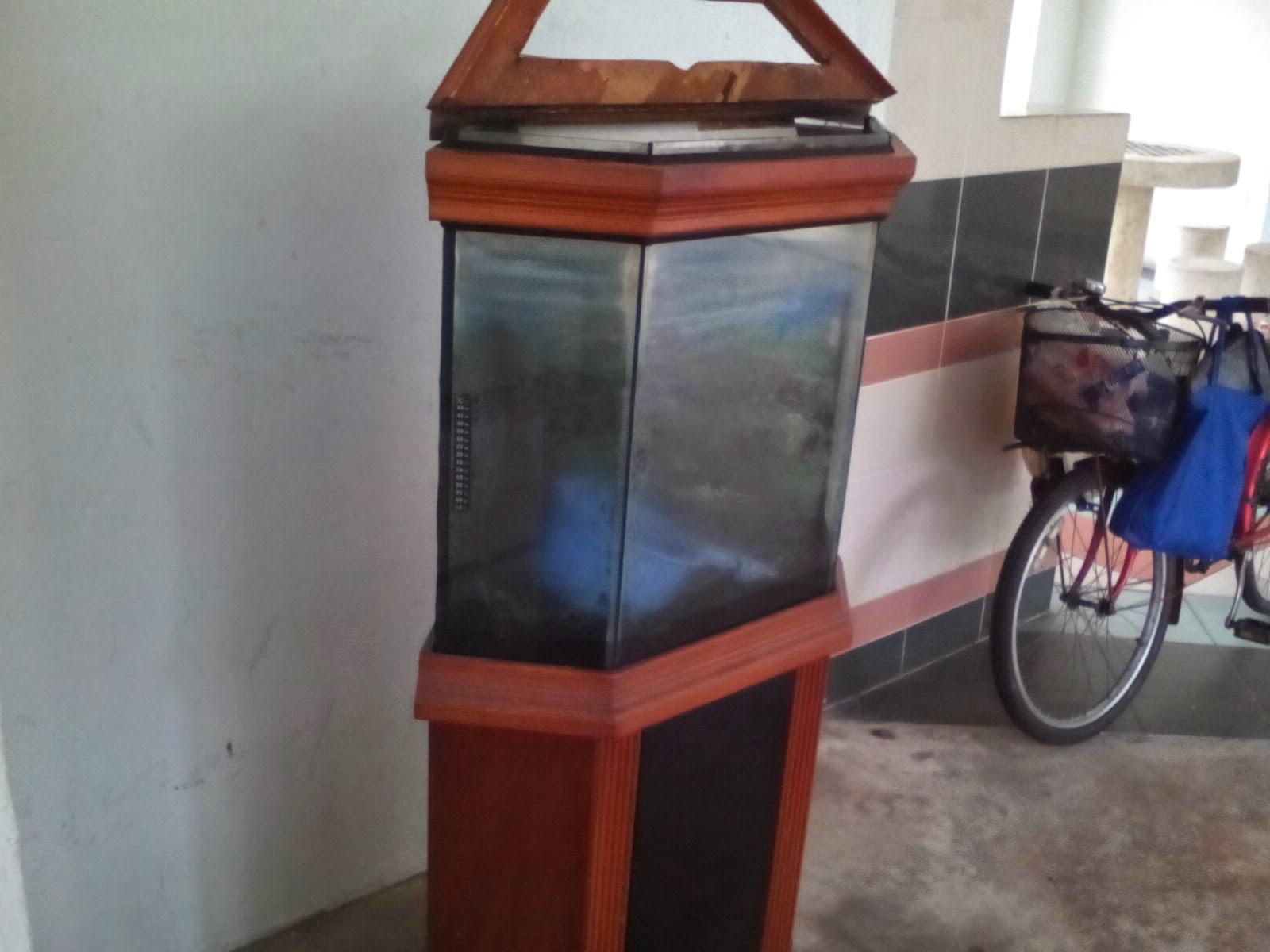 fish aquarium yishun - Fish tank | D27 Sembawang / Yishun | Gumtree ... Guppy Fish Eggs In Tank