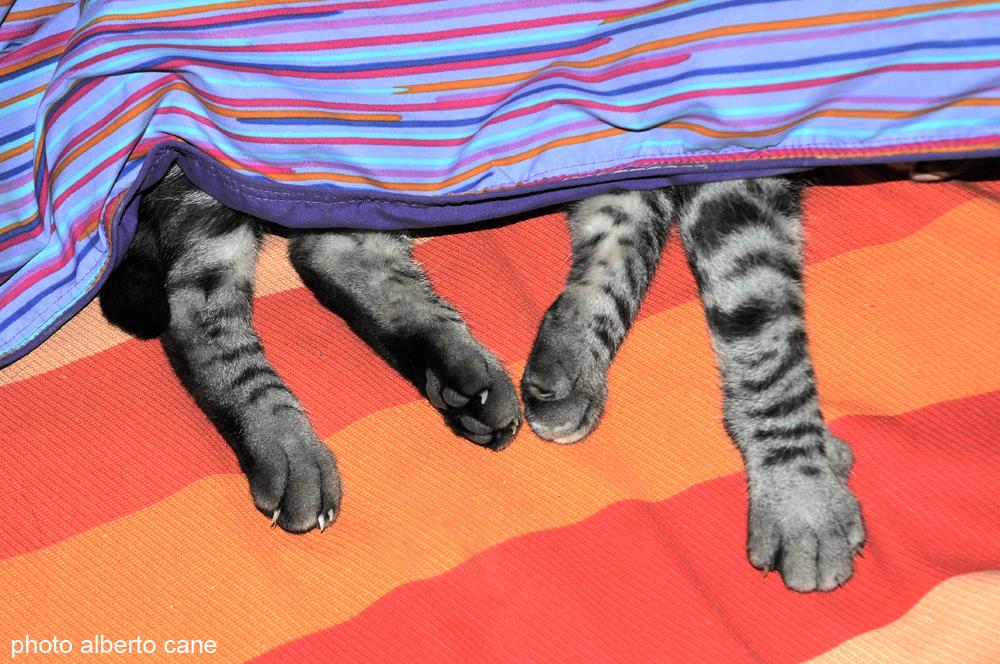 il gatto Ciro