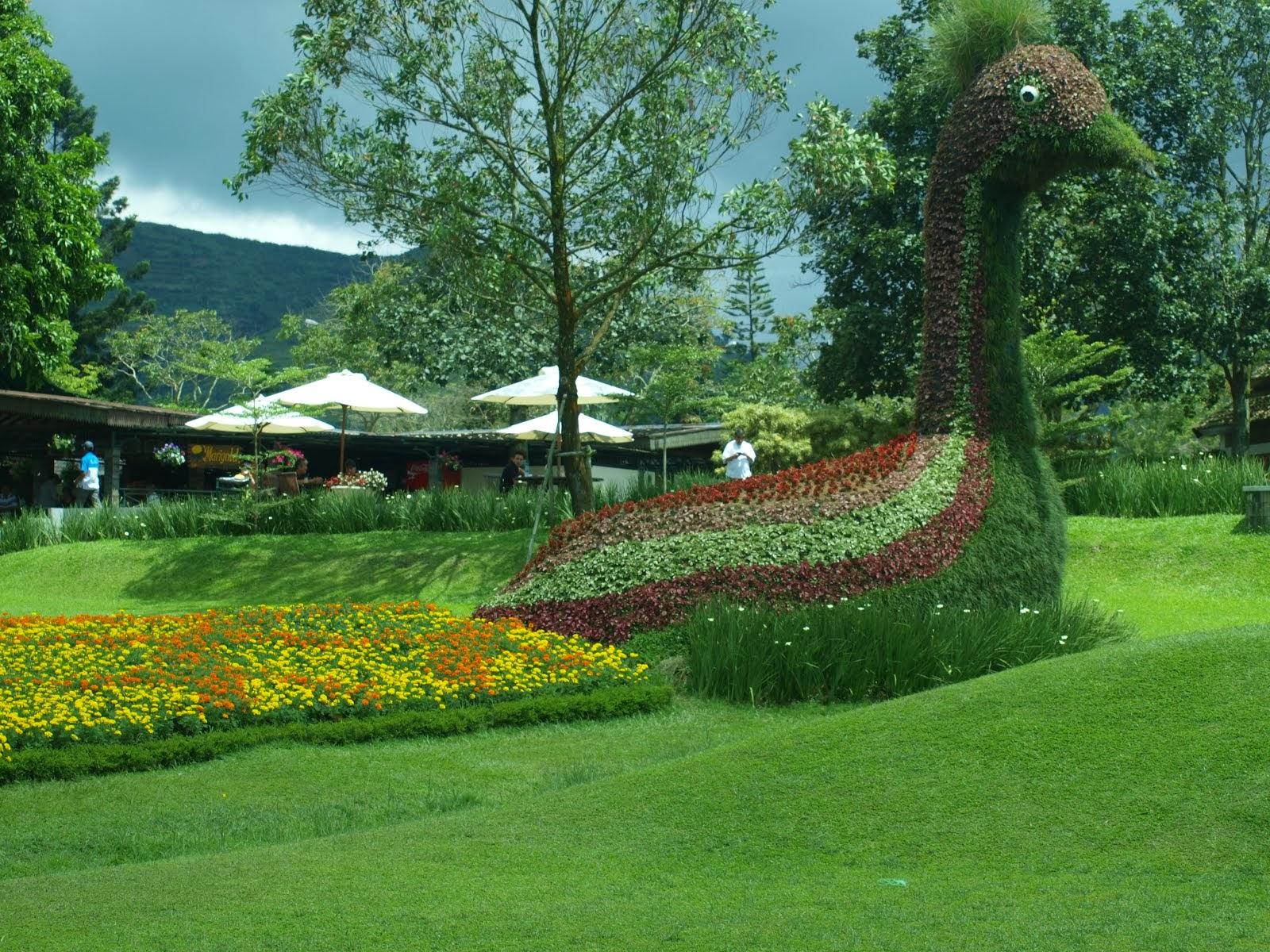 1001 gambar keren gambar taman bunga