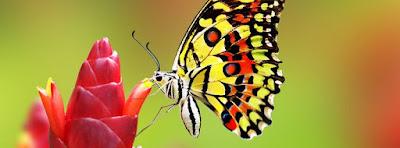 Couverture pour facebook j'aime les papillons