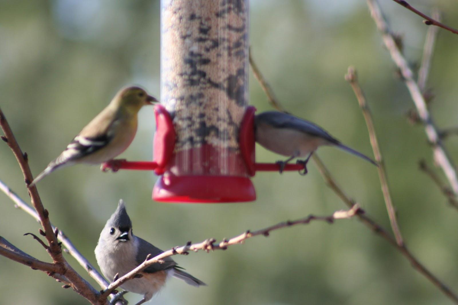 delco daily top ten birds in your backyard