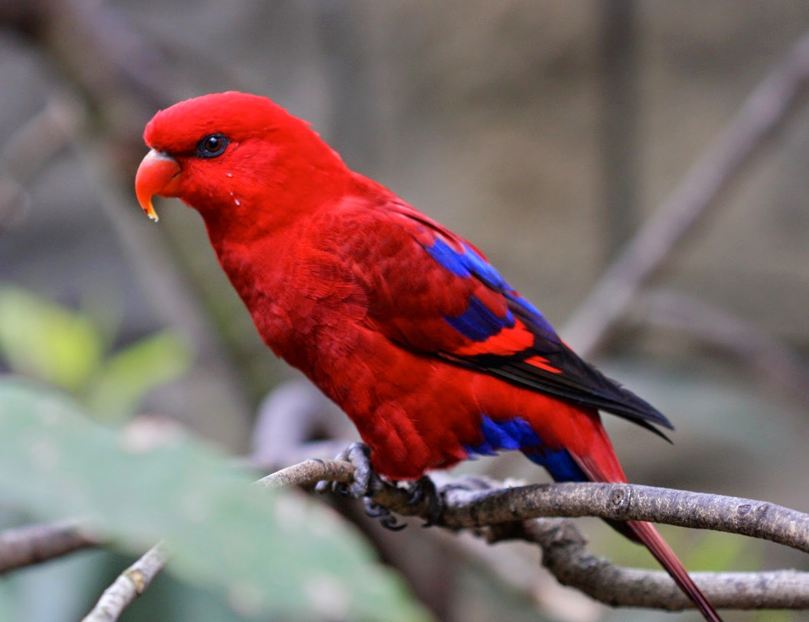 The Most Beautiful Exotic Birds In The world | Marcel Hoffmann