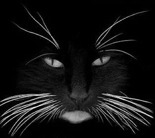 Keajaiban Pada Kumis Kucing