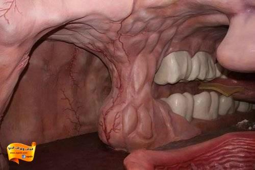 متحف لعرض تفاصيل جسم الإنسان في هولندا