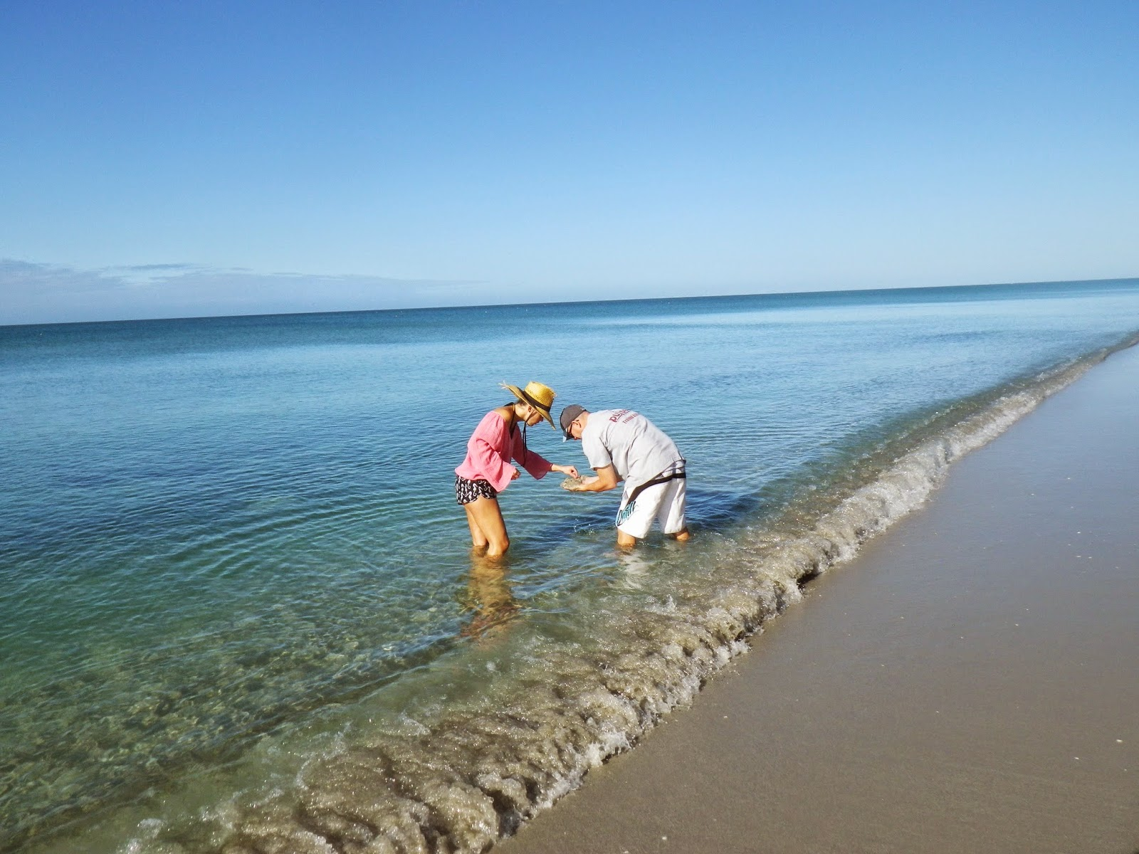 how to find shark teeth at beach