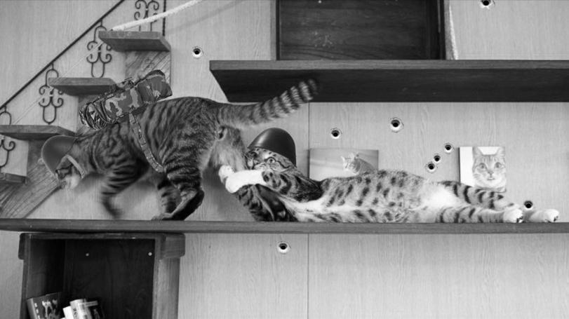 Коты в бою