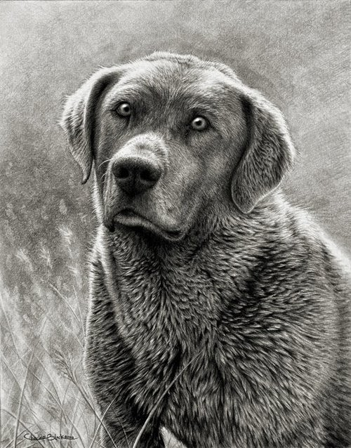 11-Charles-Black-Hyper-Realistic-Pencil-Drawings-of-Dogs-www-designstack-co