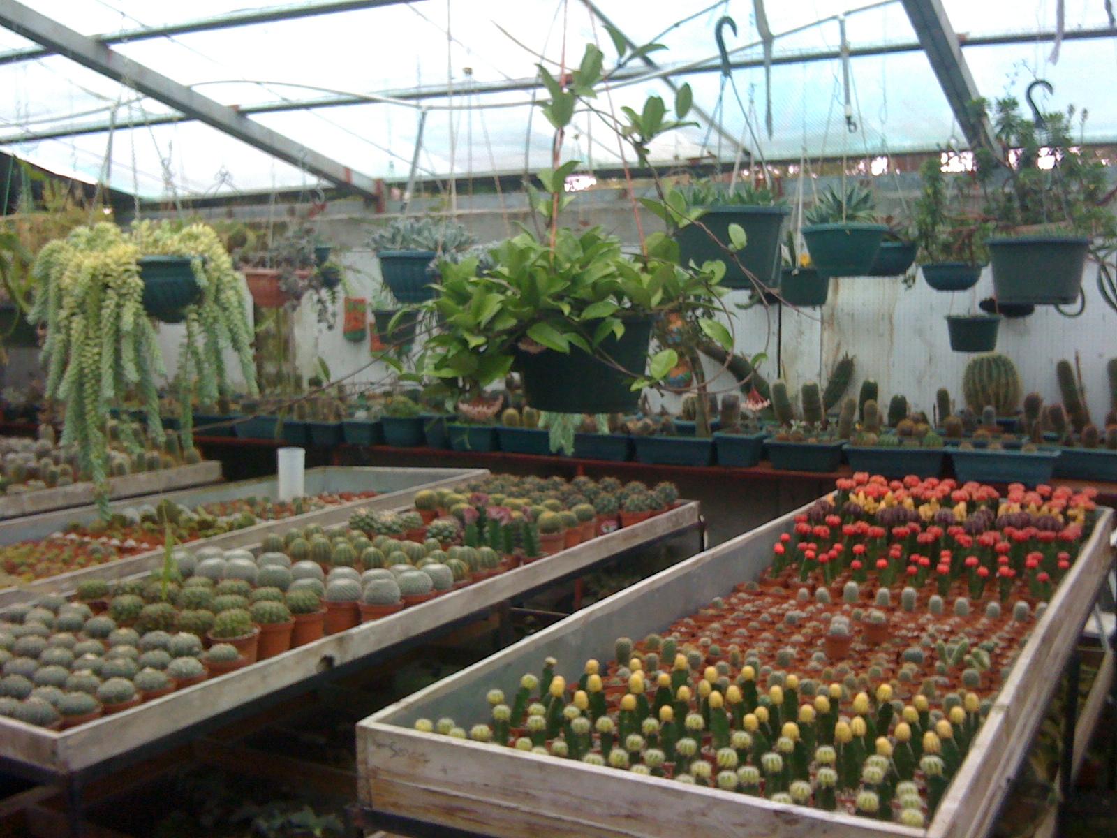 Vivero los cactus for Vivero de cactus