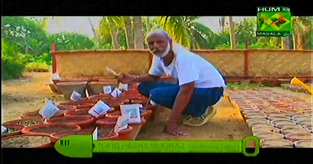 Kitchen garden with tofiq pasha mooraj masala tv show 06 spetember 2015 masala tv fast food Gardening tv shows online