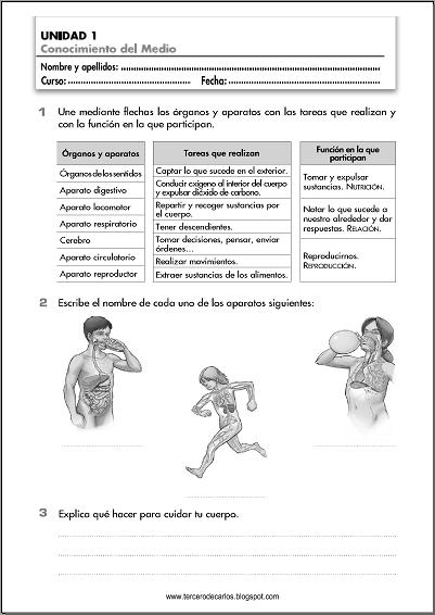 http://www.primerodecarlos.com/TERCERO_PRIMARIA/septiembre/unidad1/fichas/cono/ficha2.pdf