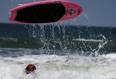Surfing Dog Championship 2011 Seen On www.coolpicturegallery.us