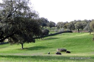 Dehesa Cerdo Iberico