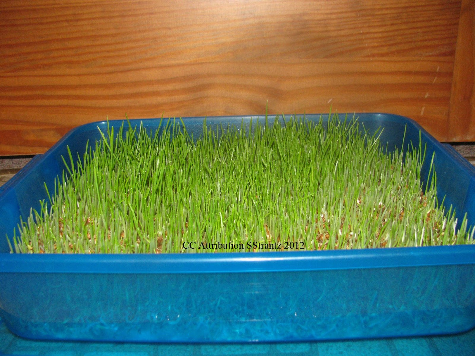 Best way to plant grass seed - Easy Ways To Sprout Seeds For Your Chickens