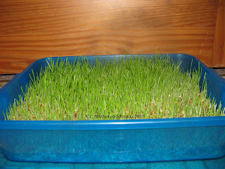 http://naturalchickenkeeping.blogspot.com/2012/12/easy-ways-to-sprout-seeds-for-your.html