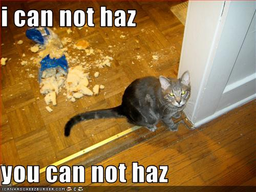 Funny Image Gallery The Top 50 Most Funny And Really Cute