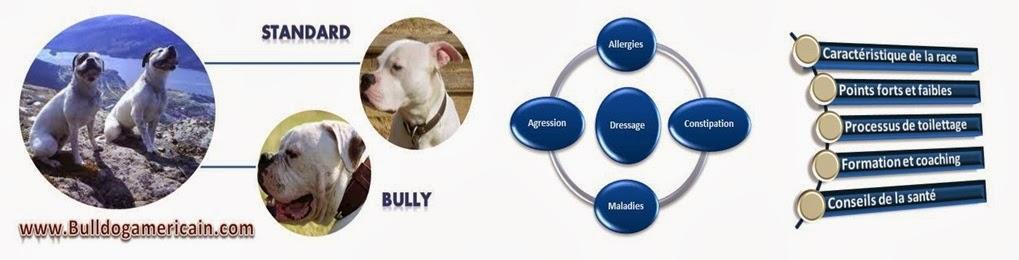 Bulldog americain