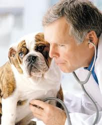 Curiosidades de Salud