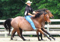 Cooler Horsemanship - Equine Communication Without Boundaries