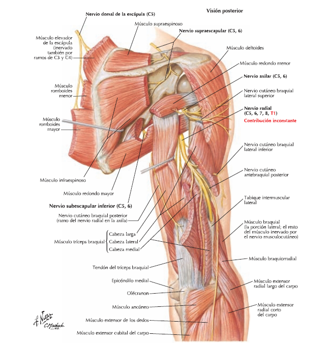 Anatomia Blog: diciembre 2015
