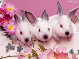 auguri, la fugassa e teneri coniglietti
