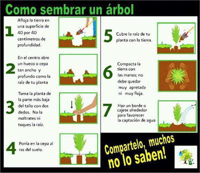 Cómo sembrar un árbol infografia