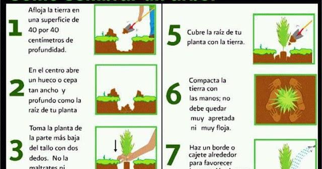 C mo plantar un rbol construccion y manualidades - Como plantar marihuana en casa paso a paso ...