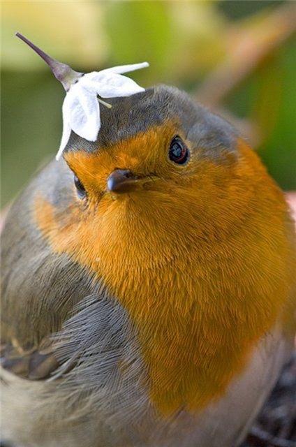 可愛鳥趣圖(一) - 亮麗 - 亮麗的博客