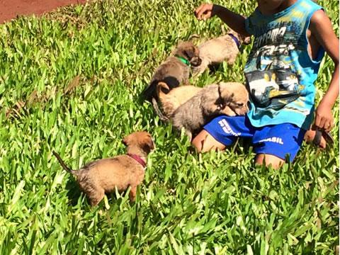 Perritos rescatados en la selva 10