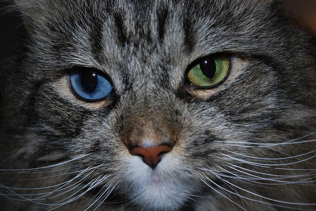 grumpy cat posters