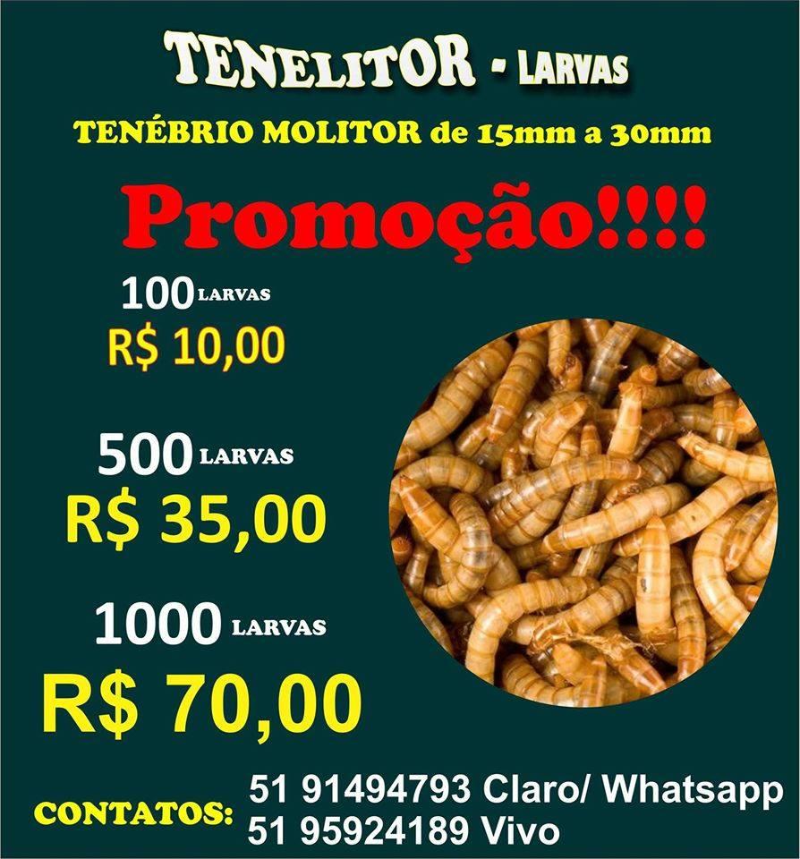 TENELITOR - Larvas