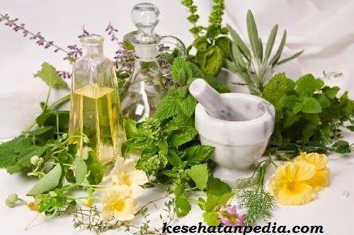 manfaat rempah dan tanaman herbal