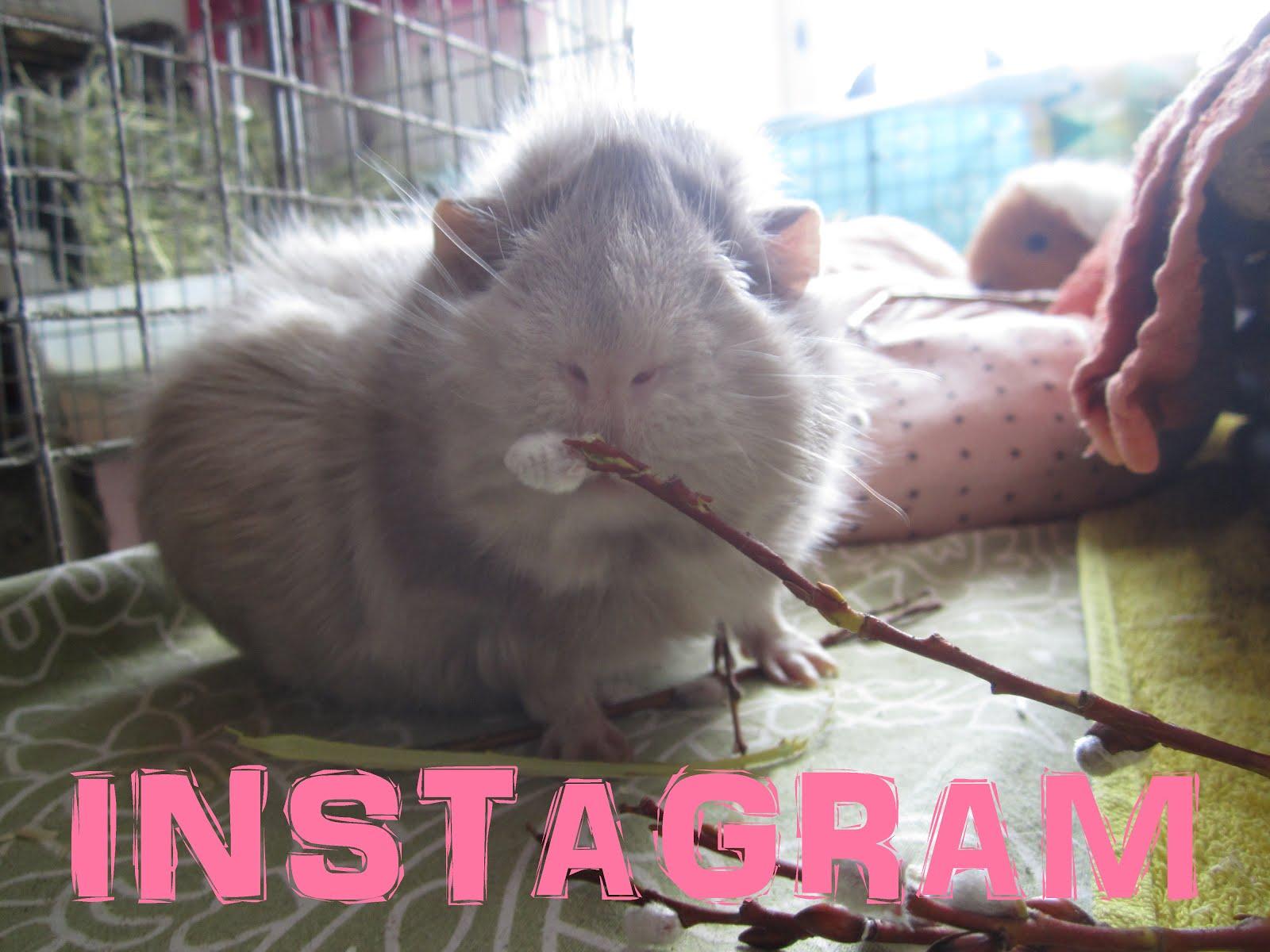 INSTAGRAM - klikkaa kuvaa