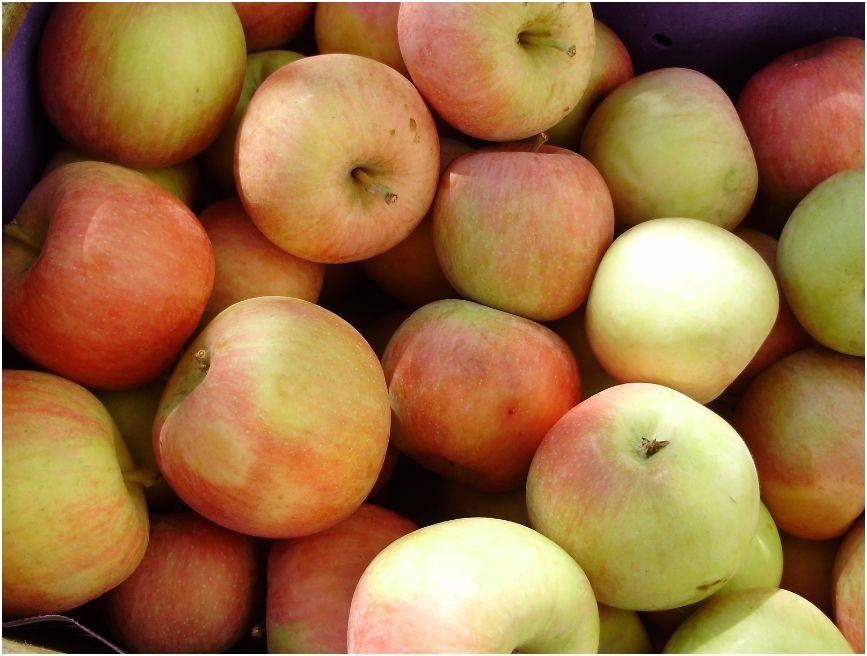 Rumore di fusa una stagione l 39 autunno 2011 3 - Mele fuji coltivazione ...