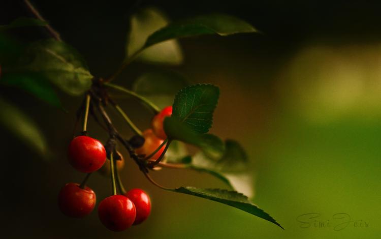 #Photography #FoodPhotography #SimiJoisPhotography